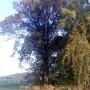 Lípa - Nakolice (památný strom)